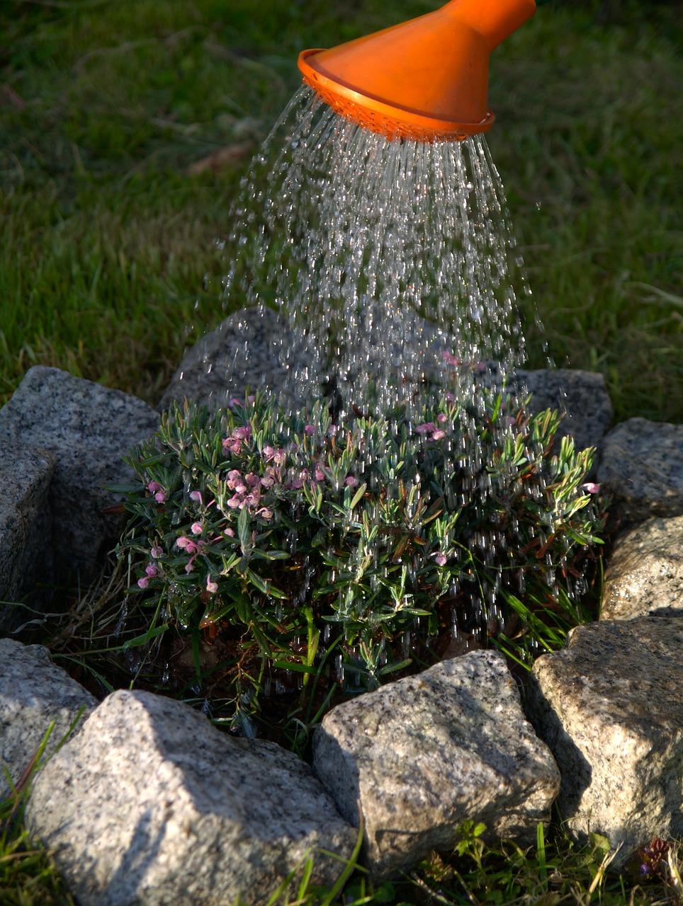 Redonnez un second souffle à votre jardin en mi-saison