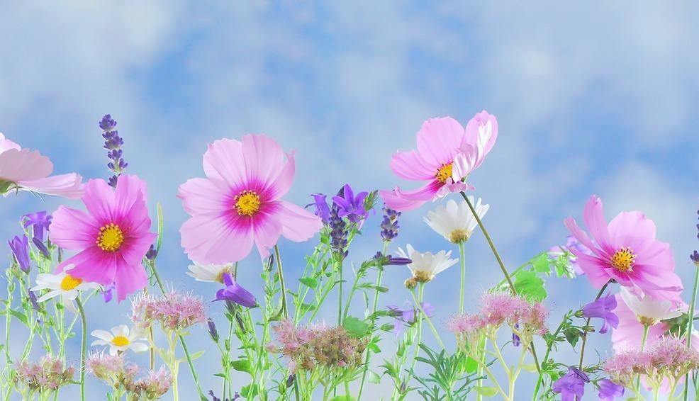 Un jardin moderne est un jardin toujours fleuri !