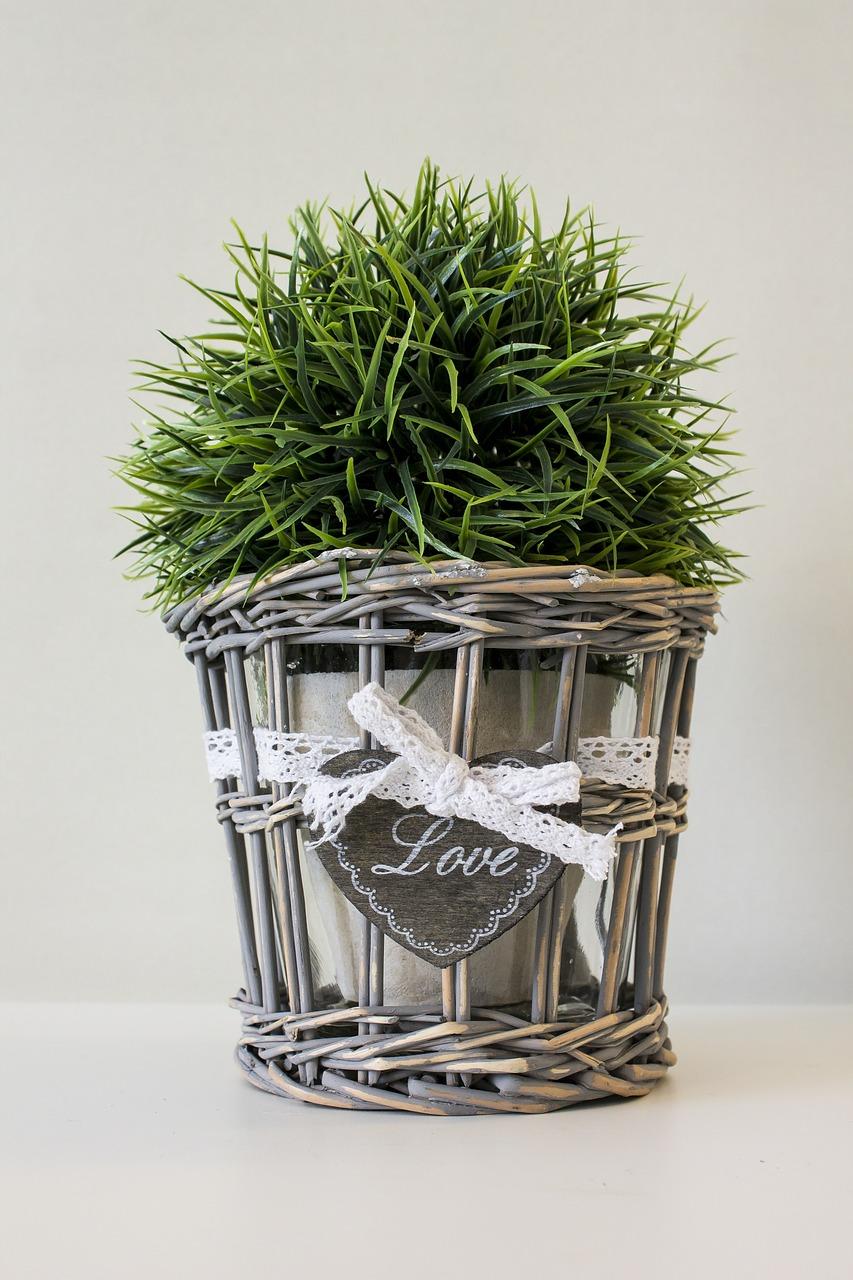 Rempotage : sortez vos plantes d'intérieur ce printemps
