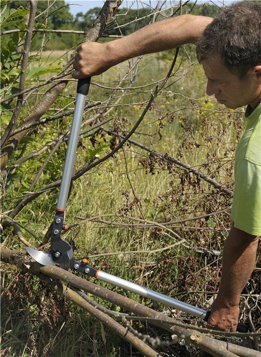 Elagage des arbres : quels outils choisir ?