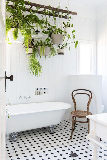 salle de bain avec plantes suspendues au dessus de la baignoire